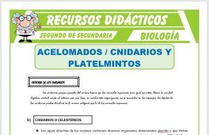 Ficha de Acelomados Cnidarios y Platelmintos para Segundo de Secundaria