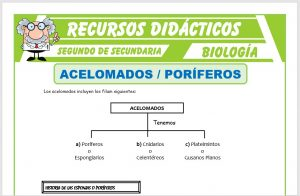 Ficha de Acelomados Poríferos para Segundo de Secundaria