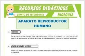 Ficha de Aparato Reproductor Humano para Quinto de Secundaria