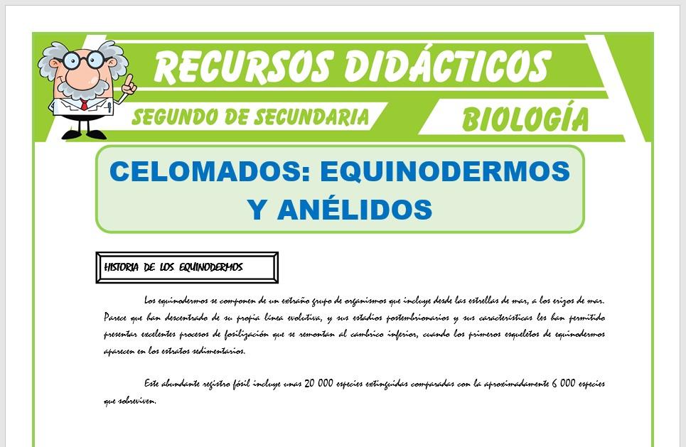 Ficha de Celomados Equinodermos y Anélidos para Segundo de Secundaria