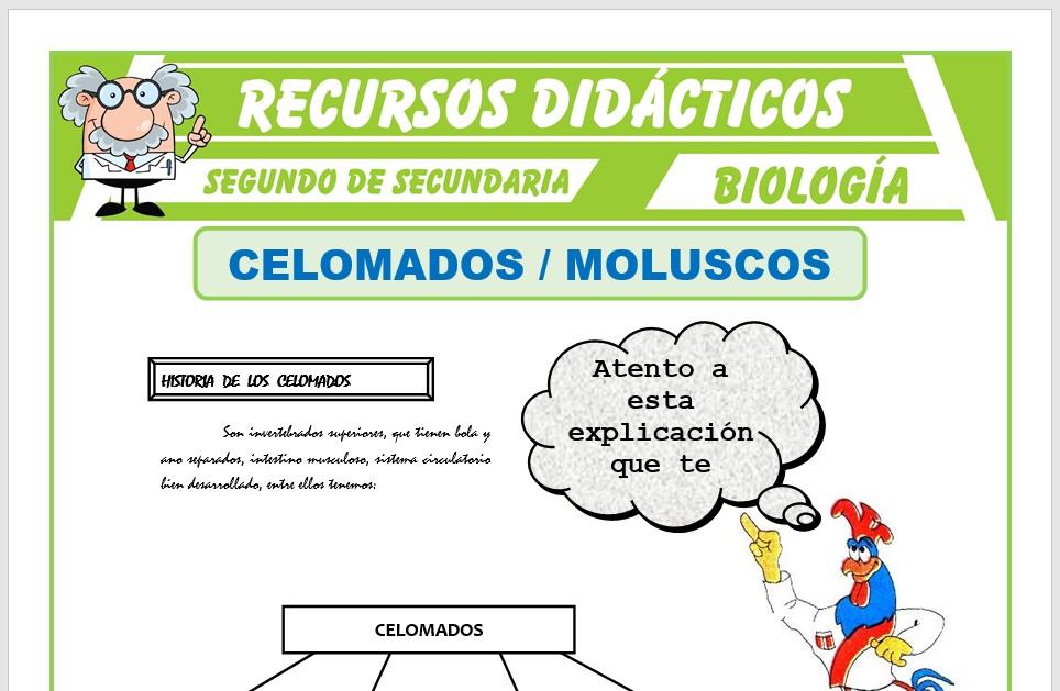 Ficha de Celomados Moluscos para Segundo de Secundaria