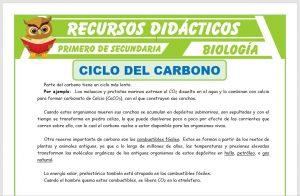 Ficha de Ciclo del Carbono 2 para Primero de Secundaria