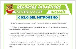 Ficha de Ciclo del Nitrógeno para Primero de Secundaria