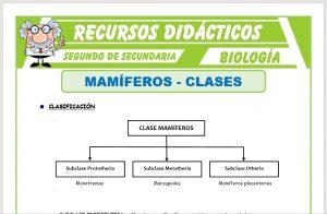 Ficha de Clases de Mamíferos para Segundo de Secundaria