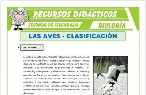 Ficha de Clasificación de las Aves para Segundo de Secundaria
