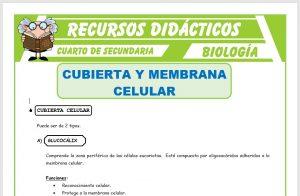 Ficha de Cubierta y Membrana Celular para Cuarto de Secundaria