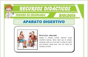 Ficha de El Aparato Digestivo para Tercero de Secundaria