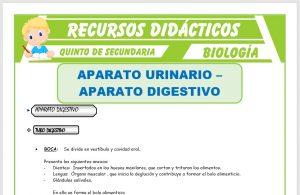 Ficha de El Aparato Digestivo y Urinario para Quinto de Secundaria