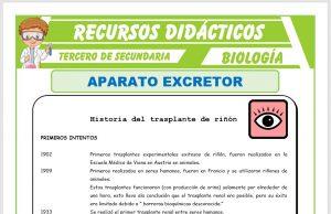 Ficha de El Aparato Excretor para Tercero de Secundaria