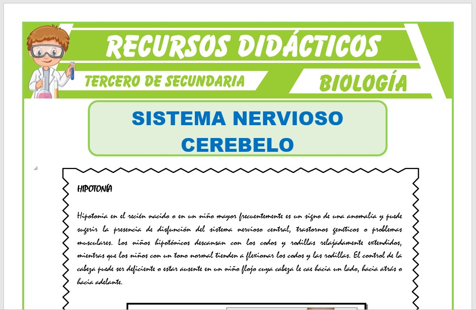 Ficha de El Cerebelo para Tercero de Secundaria