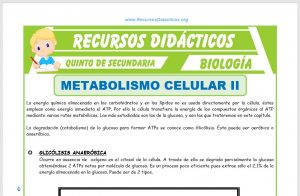 Ficha de El Metabolismo Celular 2 para Quinto de Secundaria