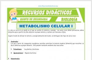 Ficha de El Metabolismo Celular para Quinto de Secundaria