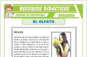 Ficha de El Olfato para Tercero de Secundaria