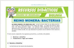 Ficha de El Reino Monera Bacterias para Segundo de Secundaria