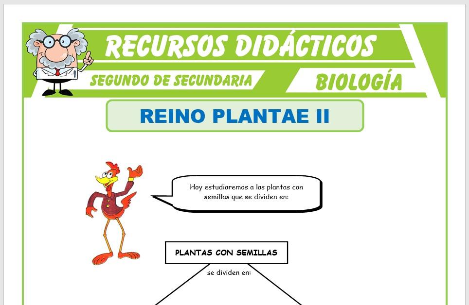 Ficha de El Reino Plantae Gimnospermas para Segundo de Secundaria