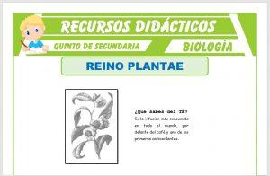Ficha de El Reino Plantae para Quinto de Secundaria