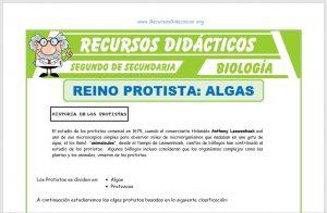 Ficha de El Reino Protista Algas para Segundo de Secundaria
