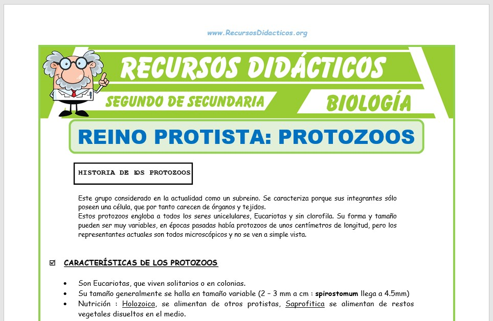 Ficha de El Reino Protista Protozoos para Segundo de Secundaria