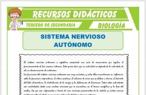 Ficha de El Sistema Nervioso Autónomo para Tercero de Secundaria