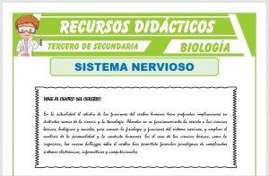 Ficha de El Sistema Nervioso para Tercero de Secundaria
