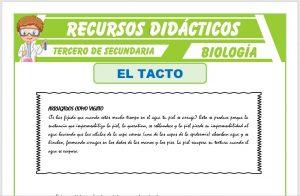 Ficha de El Tacto para Tercero de Secundaria