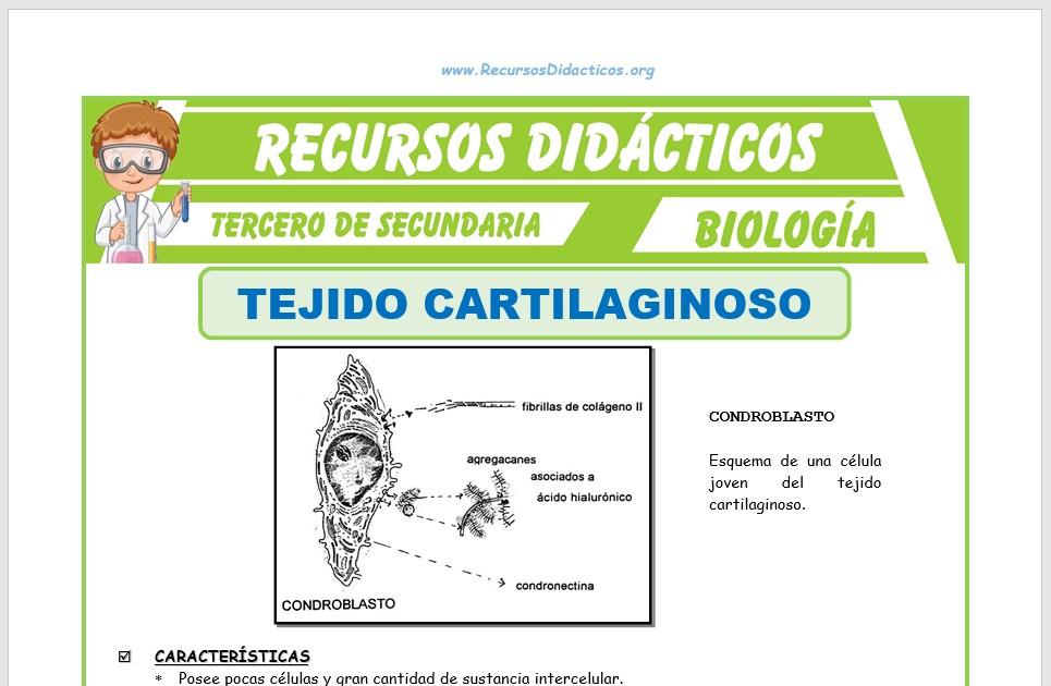 Ficha de El Tejido Cartilaginoso para Tercero de Secundaria