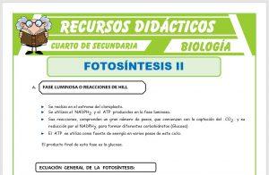 Ficha de Fases de la Fotosintesís para Cuarto de Secundaria