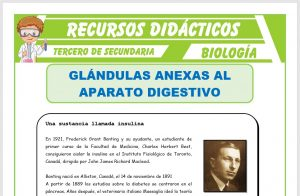 Ficha de Glándulas Anexas al Aparato Digestivo para Tercero de Secundaria