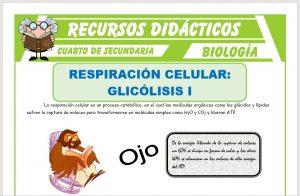 Ficha de Glicólisis Anaeróbica para Cuarto de Secundaria
