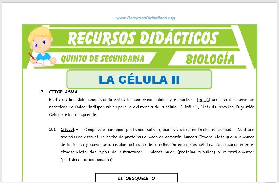 Ficha de La Célula 2 para Quinto de Secundaria