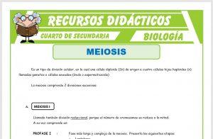 Ficha de La Meiosis para Cuarto de Secundaria