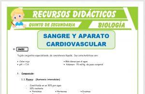 Ficha de La Sangre y Aparato Cardiovascular para Quinto de Secundaria
