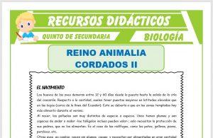 Ficha de Las Aves Características para Quinto de Secundaria
