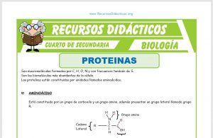 Ficha de Las Proteínas para Cuarto de Secundaria