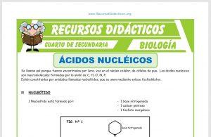 Ficha de Los Ácidos Nucleicos para Cuarto de Secundaria