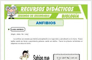 Ficha de Los Anfibios para Segundo de Secundaria
