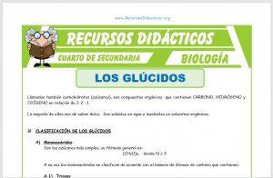 Ficha de Los Glúcidos para Cuarto de Secundaria