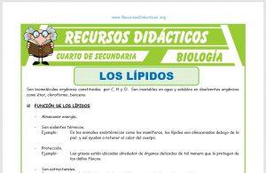 Ficha de Los Lípidos para Cuarto de Secundaria