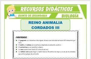 Ficha de Los Mamíferos Características para Quinto de Secundaria