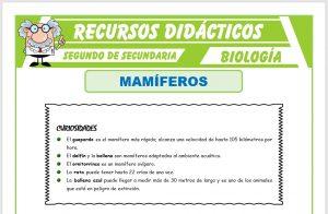 Ficha de Los Mamíferos para Segundo de Secundaria