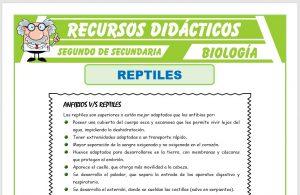 Ficha de Los Reptiles para Segundo de Secundaria