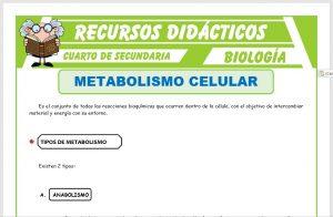 Ficha de Metabolismo Celular para Cuarto de Secundaria