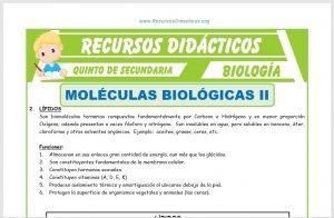 Ficha de Moléculas Biológicas 2 para Quinto de Secundaria