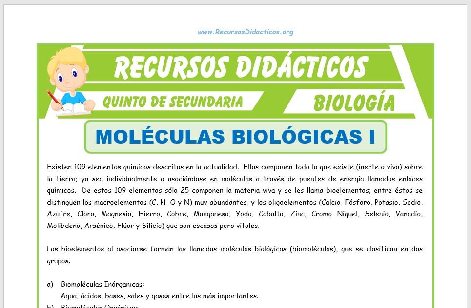 Ficha de Moléculas Biológicas para Quinto de Secundaria