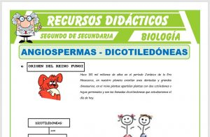 Ficha de Monocotiledoneas y Dicotiledoneas para Segundo de Secundaria