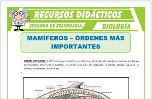 Ficha de Ordenes mas Importantes de los Mamíferos para Segundo de Secundaria