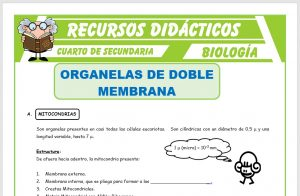 Ficha de Organelas de Doble Membrana para Cuarto de Secundaria