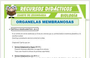 Ficha de Organelos Membranosos para Cuarto de Secundaria