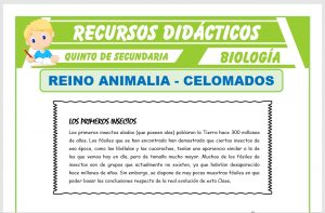 Ficha de Phylum Equinodermos y Phylum Artropodos para Quinto de Secundaria