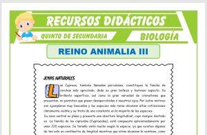 Ficha de Phylum Moluscos y Phylum Anélidos para Quinto de Secundaria